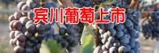 宾川葡萄今年价格_宾川县葡萄价格?
