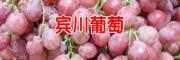 云南宾川、红提葡萄、宾川县怎么样?