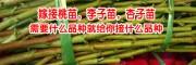 杏子苗多少钱一棵?一苗地杏子种多少垂询13769209047