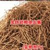 金铁锁种子批发价格[免费种植技术指导]_金铁锁厂家直销