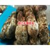 松茸的价格多少钱一斤?松茸的功效与作用丽江农特产信息网400-6633-626