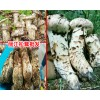 [丽江松茸--]野生松茸怎么吃?