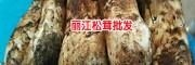 产地松茸价格是多少钱一斤?