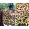 销售鲜黄精茎块300吨_贵州聚昌鼎中药材开发有限公司