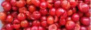 哪里有钙果苗| 哪里出售钙果苗| 哪里买有钙果苗|