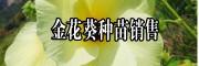 金花葵价格茶-2018金花葵花价格