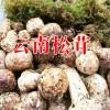 姬松茸哪里有卖|哪里卖姬松茸|丽江农特产信息网400-6633-626
