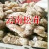 姬松茸有什么功效作用?丽江农特产信息网