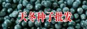 玉林/成都天冬种子多少钱一斤/13877589250