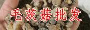 贵州野生毛茨菇 野生毛茨菇批发