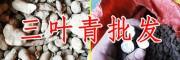 """三叶青-""""药材中的贵族"""""""