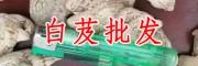 贵州 野生白芨 野生白芨批发/采购