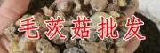 丽江山慈菇-山慈菇图片