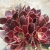 多肉植物怎么养-多肉植物花盆如何选-18788196071