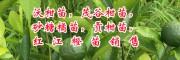 沃柑苗价格30~50cm的多少钱?