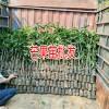 广西芒果苗价格| 广西芒果| 台农一台基地|台农一台价格|