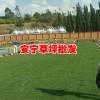 混播草坪价格表-云南冬季混播草坪-