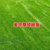 云南足球场草坪造价免费咨询13648822975,