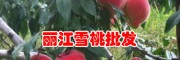 丽江雪桃树苗基地_丽江雪桃种苗多少钱一株?