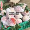 丽江玉龙雪山的桃苗_丽江雪桃苗-13628887835