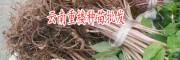 滇重楼种子几个月能出芽-15987498116