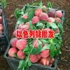 以色列早红桃苗多少钱一棵_以色列早红桃与春桃区别