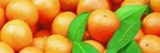 柑桔价格多少钱?