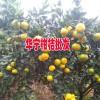 柑橘有什么功效与作用?-15808777189