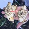 白芨图片_白芨栽培技术_白芨种植技术13987070557