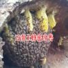 云南土蜂蜜价格_云南土蜂蜜图片13577043142