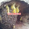 云南土蜂蜜特点_云南那里卖土蜂蜜?