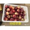 上海市哪里有昭通苹果|昭通果业基地|13887043679