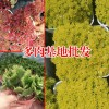 虹之玉多肉植物_多肉植物网站-18788196071