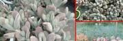 多肉植物移植方法-多肉会引来蚊虫吗?