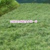 一亩百合需要多少种球?_云南宣威市百合种植专业合作社