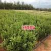 沃柑价格网_云南蒙自沃柑-13987329023刘先生