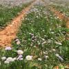 花卉土地@曲靖适合种花卉的土地出售