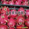 今日红心火龙果|红心火龙果多少钱