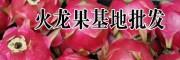 优质红心火龙果种植基地&云南红心火龙果