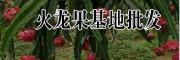 红心火龙果干片批发&火龙果花销售-文山火龙果合作社