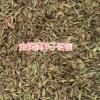 金铁锁种子新价格_昆明哪里能买到金铁锁15770482963