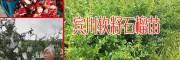 软籽石榴_云南软籽石榴种植的条件与要求