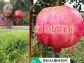 云南水果成熟时间表_水果自然成熟时间表(图片大全)