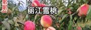 丽江县市雪桃价格_丽江雪桃价格表
