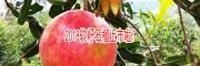 会泽_ 云南会泽县果树苗种植网
