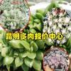 北京.上海,附近的多肉基地_多肉地址大全_多肉花名称植物图片