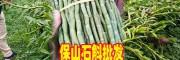 云南家种石斛多少钱一斤_种植铁皮石斛