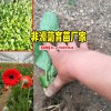 云南花卉云南花卉网_云南花卉公司——景鑫花卉