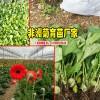 昆明非洲菊有哪些品种?_非洲菊常见的盆栽品种有