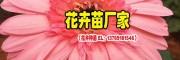 非洲菊与其他鲜花搭配花语(值得收藏)_非洲菊花卉批发销售